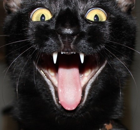 funny-cats-part-pics-funny-animal2